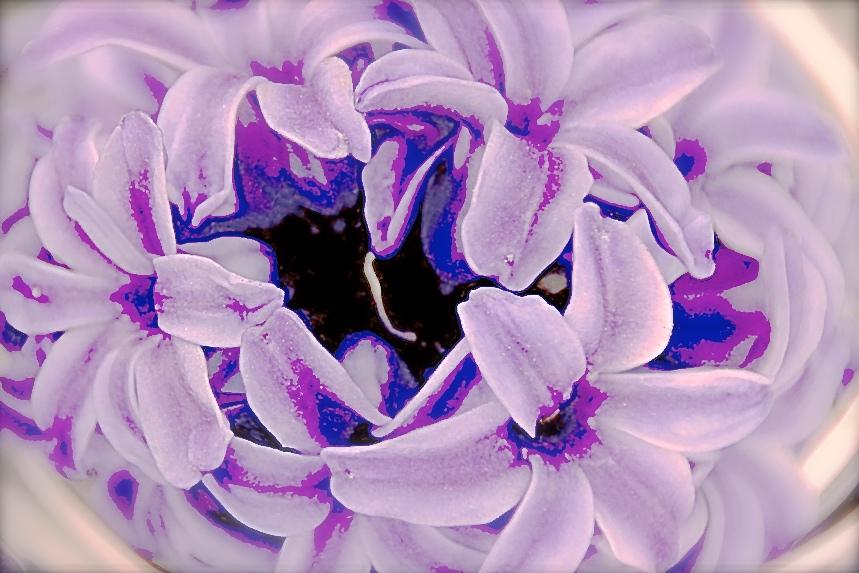 hyacinth-654912_1280